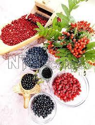 Bærre lækkert med viltre bær. Fra reportasje i A-Magasinet høsten 2009