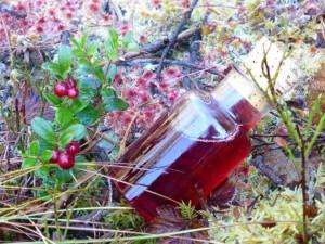 Tyttebærsirup. Foto Jesper Nohr